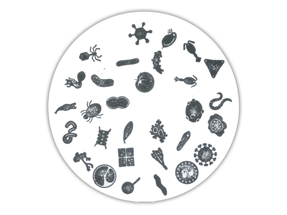 stempelkaart Micropia